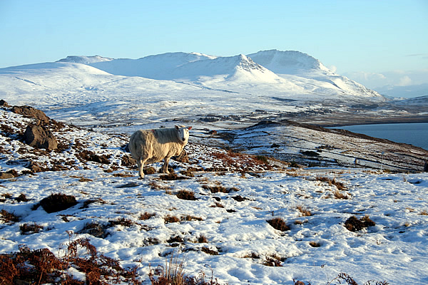 Ben Mor Coigach in Winter